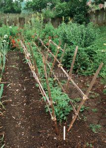 подвязка томатов в ОГ
