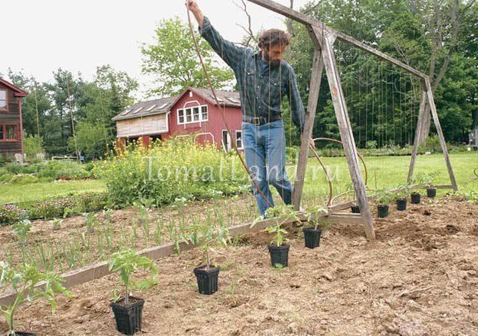 Опоры для помидоров фото