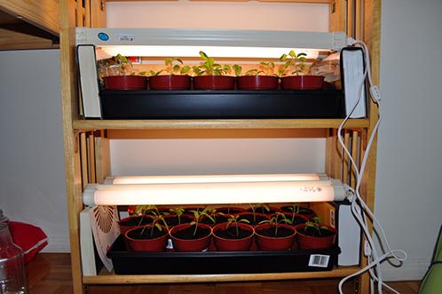 лампы для томатов