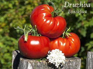 помидоры дружба отзывы