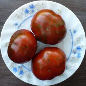 семена томатов от Попенко