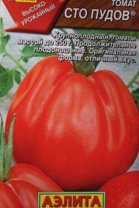 помидор 100 пудов фото