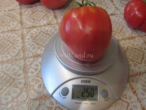 помидоры абаканский розовый