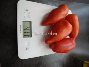помидоры римский полосатый отзывы