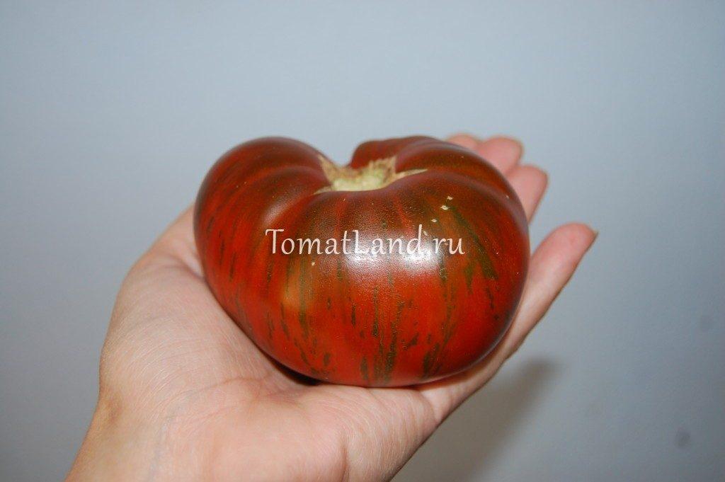 помидоры полосатый шоколад фото спелых плодов