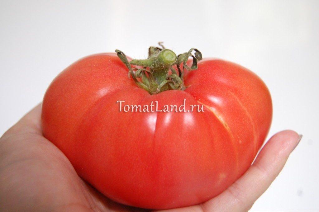 томат кардио фото