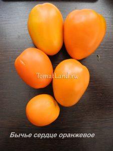 томат бычье сердце оранжевый фото