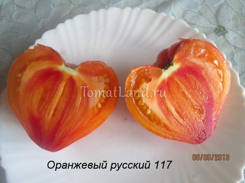 сорт Оранжевый русский отзывы