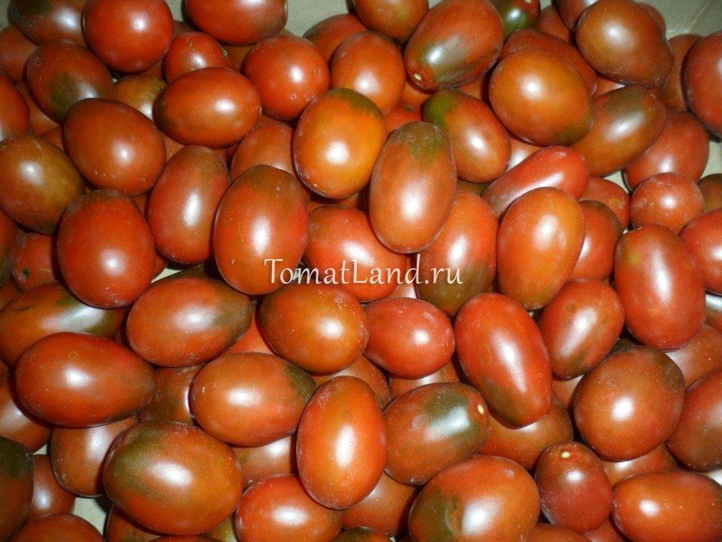 помидор шоколадный зайчик фото