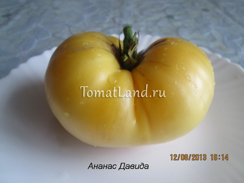 томат сорт Ананас Давида фото спелых плодов