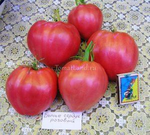 томат бычье сердце розовые