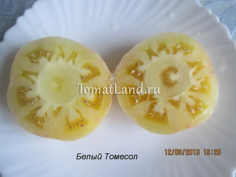помидоры Белый томесол фото