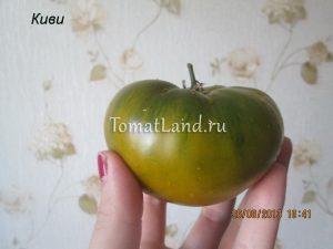 помидор сорт киви