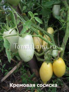 томаты Сосиска кремовая отзывы