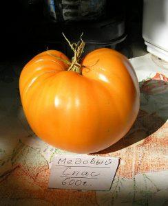 томат медовый спас