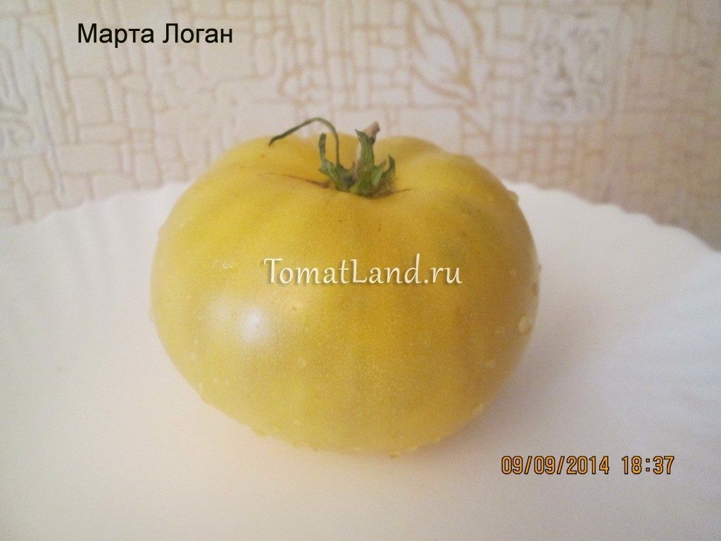 помидоры сорт Марта Логан фото