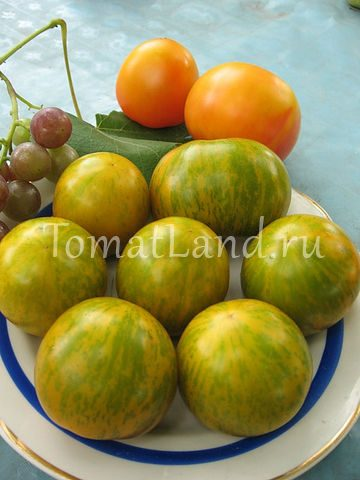 сибирский малахит томат отзывы фото