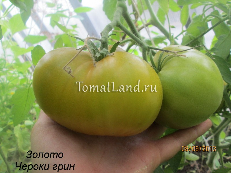 помидоры Золото чероки грин