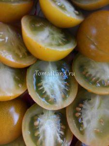 томат сорта зеленый виноград