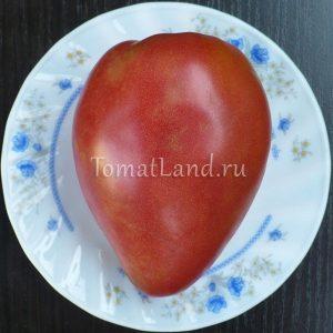 помидоры американский вытянутый
