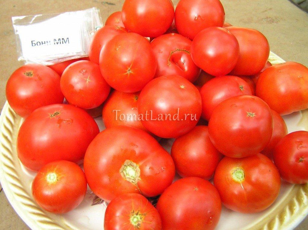 помидоры бони мм фото