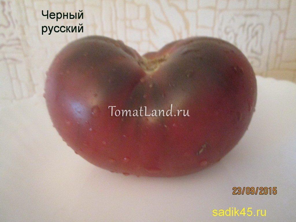помидоры сорт Черный русский фото