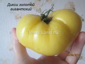 помидоры Дикси золотой гигантский отзывы
