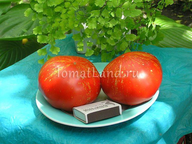 помидоры фейерверк фото спелых плодов
