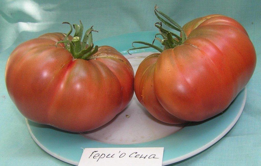 помидоры гари о сена