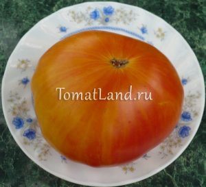томаты интуитивная прозорливость