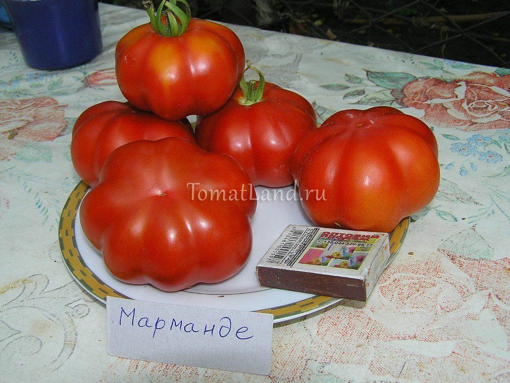 помидоры Марманде фото спелых плодов