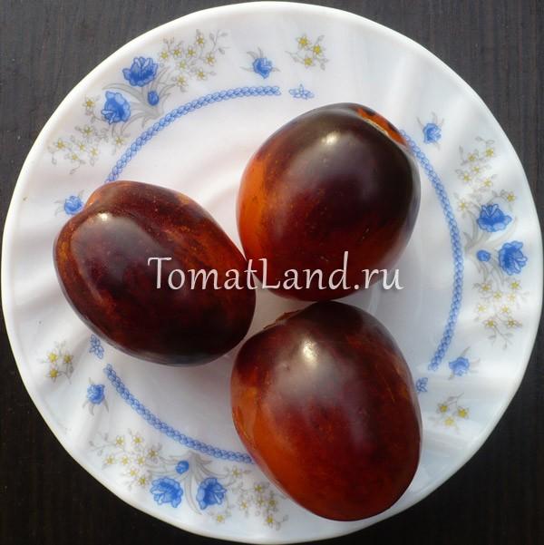 помидоры сорт фиолетовый дракон отзывы