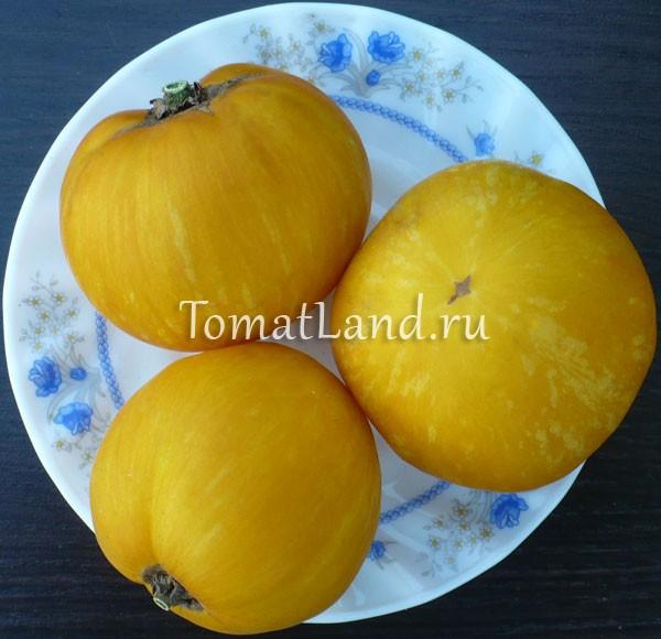 помидоры Желтый кабан фото