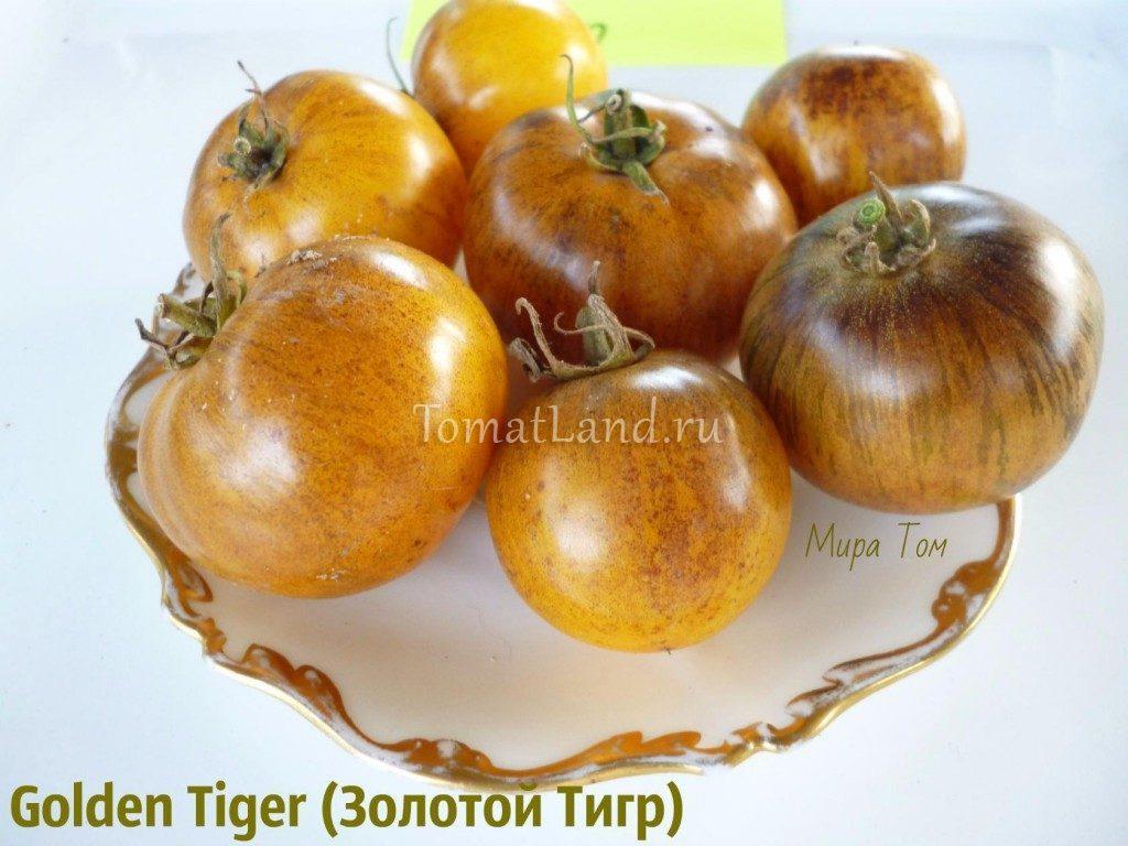 помидоры золотой тигр фото спелых плодов