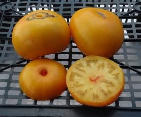 помидоры бабушкин поцелуй