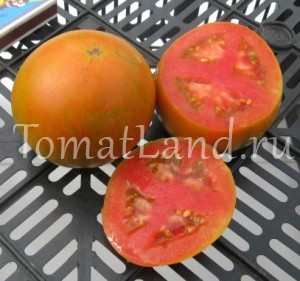 помидоры сорт Новогодний