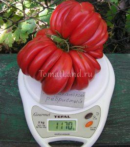 томат американский ребристый