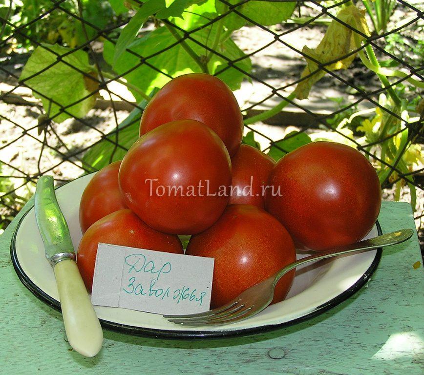 помидоры Дар заволжья фото спелых плодов