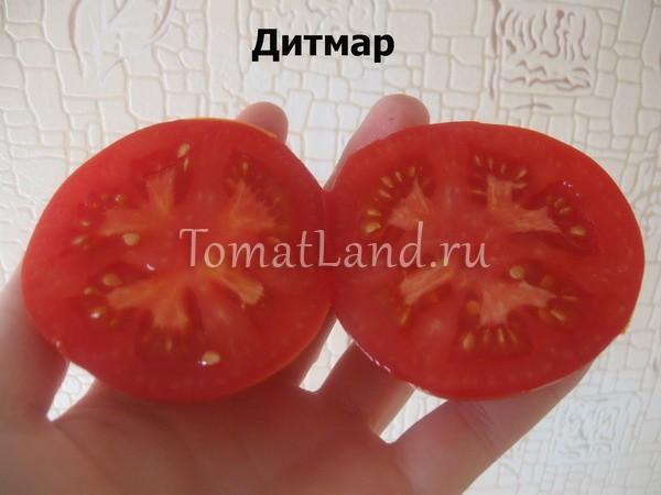 помидоры сорта Дитмар фото