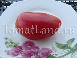помидоры сорт Дульсинея