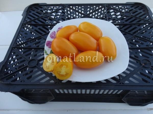 помидоры гельфрут золотой сорт фото
