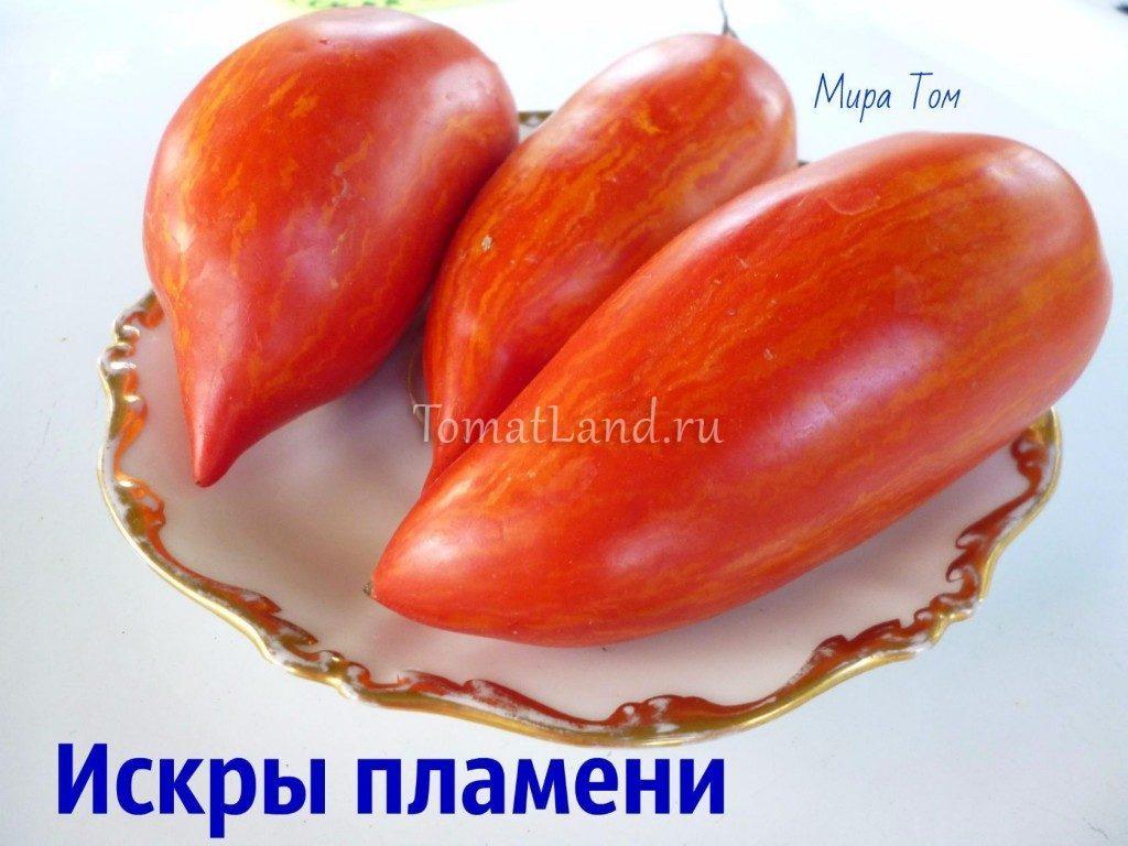 помидоры искры пламени