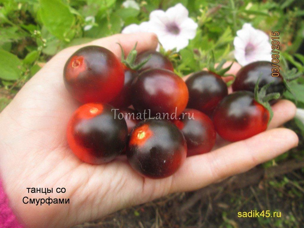 сорт Танцы со смурфами фото спелых плодов