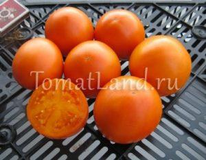 томаты Волшебник отзывы