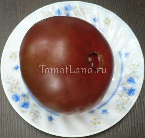 помидоры Ворлон фото