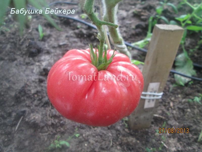 помидоры Бабушка Бейкера фото спелых плодов