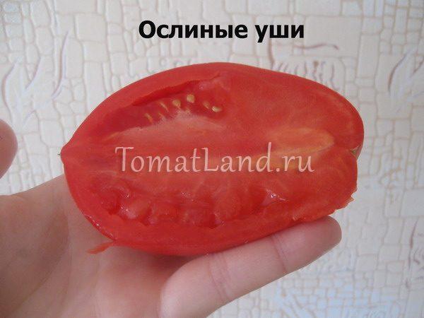 помидоры ослиные уши фото в разрезе