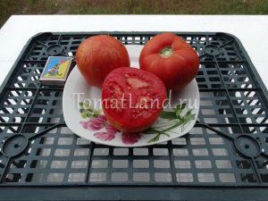помидоры экзоты