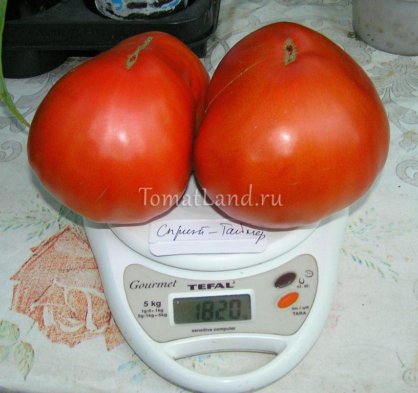 томат спринт таймер