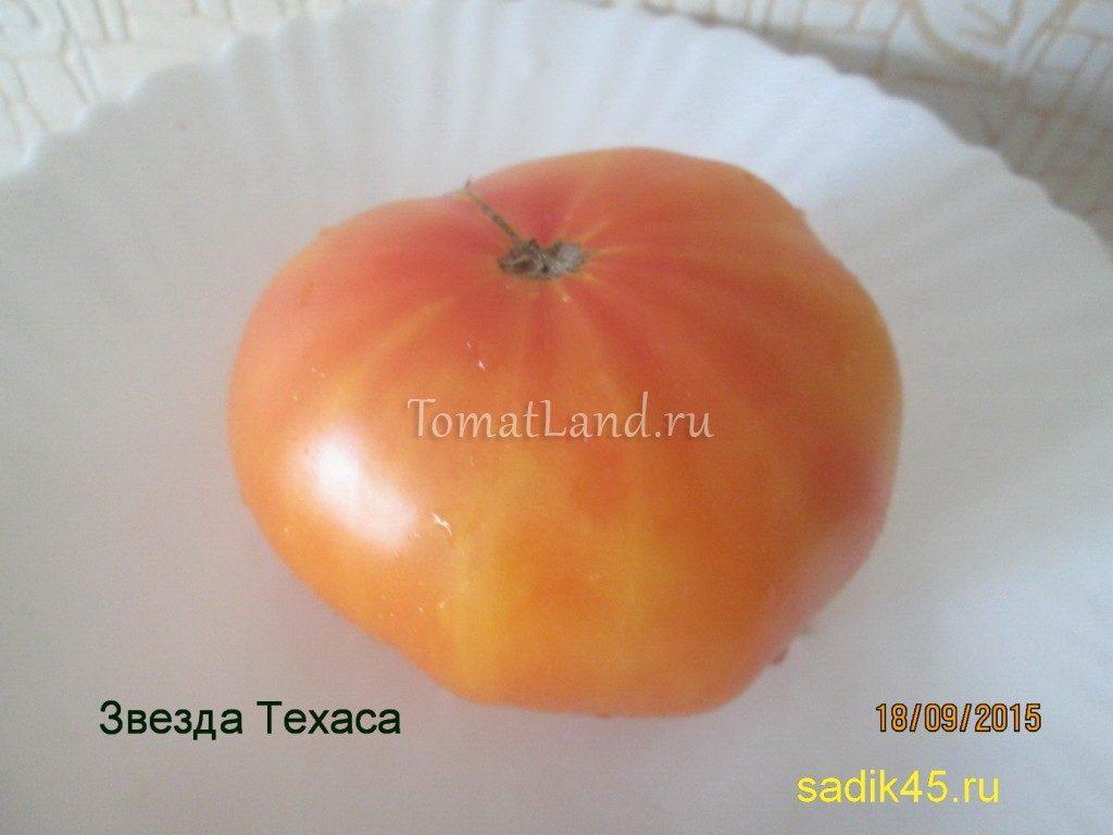 помидоры звезда техаса фото